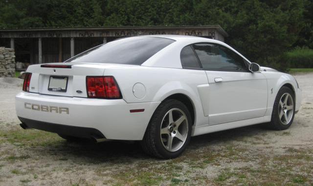 20032004 Ford Mustang SVT Cobra The Terminator  The Motoring